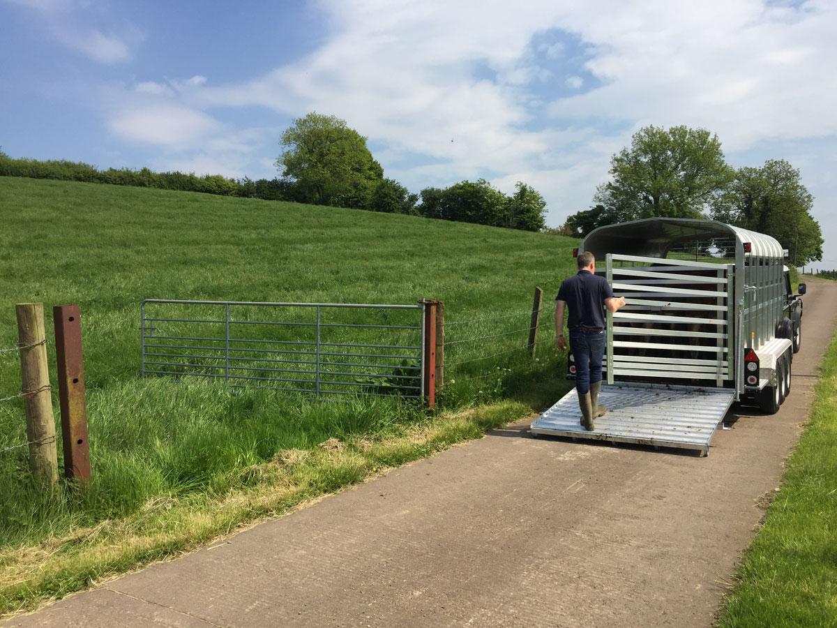 Nugent Livestock Trailers Northern Ireland